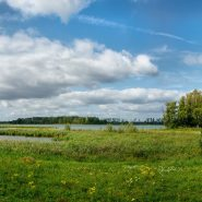 Panorama: Biesbosch