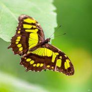 Vlindertuin in de Orchideeën Hoeve in Luttelgeest