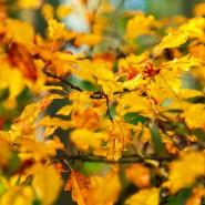 Herfst kleuren – 2013