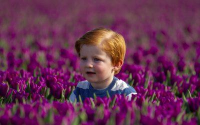 David in de tulpen
