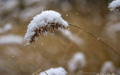 Eerste sneeuw in 2021